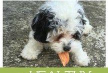 Natural Pet Care & Treats