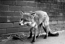 Foxy / by Chandra Summers