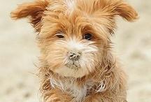 I want one!!  / by Missy Burton