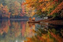 autumn / by Sherrie Phillips