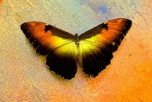 ~ Lepidoptera ~ / God was having a grand day when he made butterflys! / by RoseMary Salzman