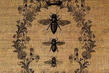 Bee My Little Honeybee / by MaryJo Garraty