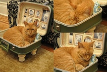 pet beds and kitty cats / by Diane Williams
