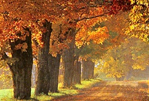 Autumn / I love it all~Fall~Halloween~Thanksgiving~my favorite season~ENJOY~ / by Janet Hall