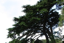 Trees ! :)