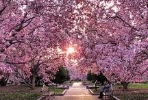 Fantastic Nature