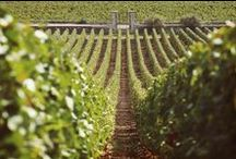 Wine Cellarage Events