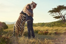 Close encounters of the animal kind / by Paula Cummings