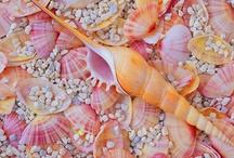 She Sells Sea Shells...... / by Paula Cummings