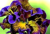 Flowers of beauty / by Paula Cummings