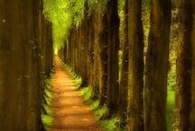 Walk ways and paths / by Paula Cummings