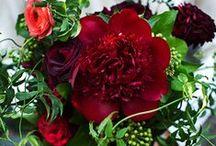 Rhapsody in Red / Red wedding flowers / by Elizabeth Jackson