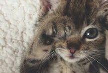 Little Creatures / The little creatures that melt hearts