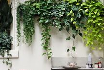 Scouted :: Indoor plants / by We Are Scout