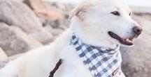 COCO + PISTACHIO PET ACCESSORIES / FINE PET ACCESSORIES | DOG BANDANAS | HANDCRAFTED IN NEW YORK