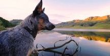 DOGS + HIKES / OUTDOORS | PET-FRIENDLY | ADVENTURES