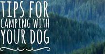 DOG + CAMPING
