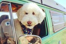 OUR BLOG / Blog for pets and pet owners