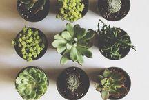 Nice little things.