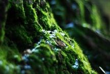 Nature Detailed / Plants, mushrooms, crystals and other curiosities found into the woods.