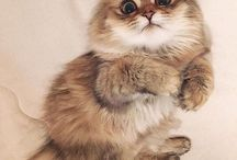 Animals / Les animaux / Just cute pets pictures, 100% sweetness