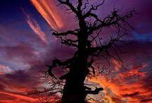 TREE ART / by Sheryl Hicks