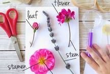Botany for Kids / Botany for kids.