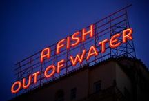 A Fish Out of Water - Blogs / Latest Blogs from my website