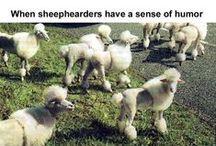 Fiber Funnies / Sheepish and Woolly Humor