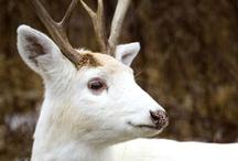 Elusive White and Black Animals / elusive white and black animals
