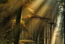 God's beautiful creation / by Rachel Rylee