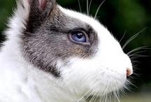 Bunny Rabbit / rabbits, bunnies, vintage, illustration, antique, japanese