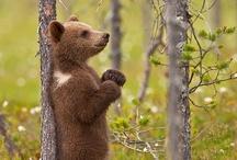 little bear / by Sonia Romero