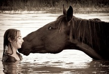 Horses / Bit by the bug! / by Hannah