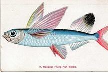 flying fish catalina