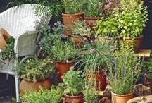 House: Planter Garden