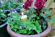 Gardening / by Cindy Staples Morman