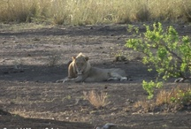 Safari ending 25 October 2012
