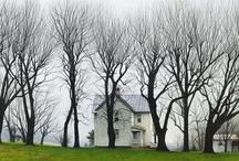 Trees / Tree photos for tree lovers! I love trees!