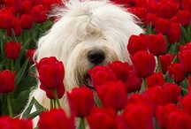 Really Love RED!! / by Diane McDonald