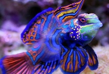 Marine life / by Cara Nims