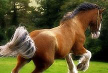 Horses - gentle giants / by Cara Nims