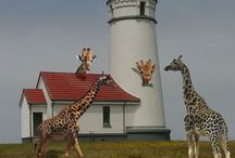 Light House / by Ellie The Gifted Giraffe