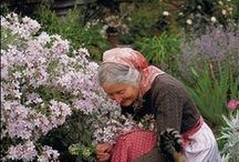 Cottage Gardens  / Ideas for cottage gardens.