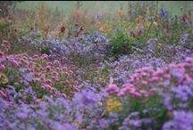 Naturalistic plantings / Soft natural lines, movement and colors! Man mimicking Nature!