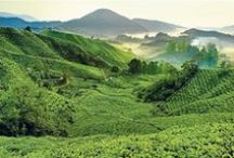 Marvellous Malaysia / Malaysia truly Asia, a true oriental gem.