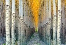 Allée / An alley in a formal garden or park, bordered by trees or bushes