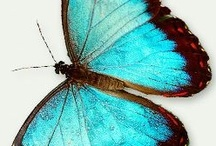 Painted Butterfly Inspiration / Ideas and color schemes for Decorative Painting