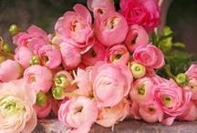 Fleurs / by Alisha Gillespie