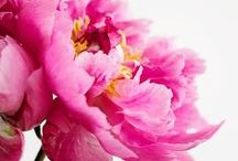 THE FLOWER MART / Flowers & floral designs / by L M Gray Bijouxs.com